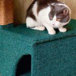 Как сделать когтеточку и домик для кошек