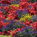 Цветочные композиции и цветники для сада